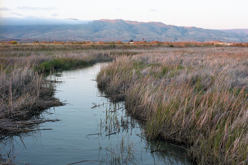 Creek shown coursing through the wetlands at Don Edwards Wildlife Refuge at Alviso, at the south end of San Francisco Bay. In the distance, fogbank moving in on the mountains of the southern East Bay.