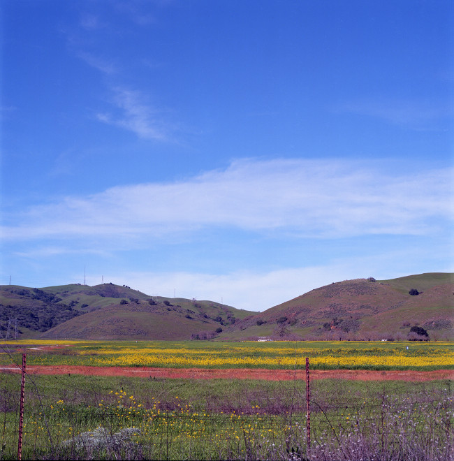 Pasture along Bailey Road. Flowers populate a meadow; green hills rise in the distance; blue sky, quiet white clouds floating by, one cloud over the hills, one cloud darts into the picture from upper left.