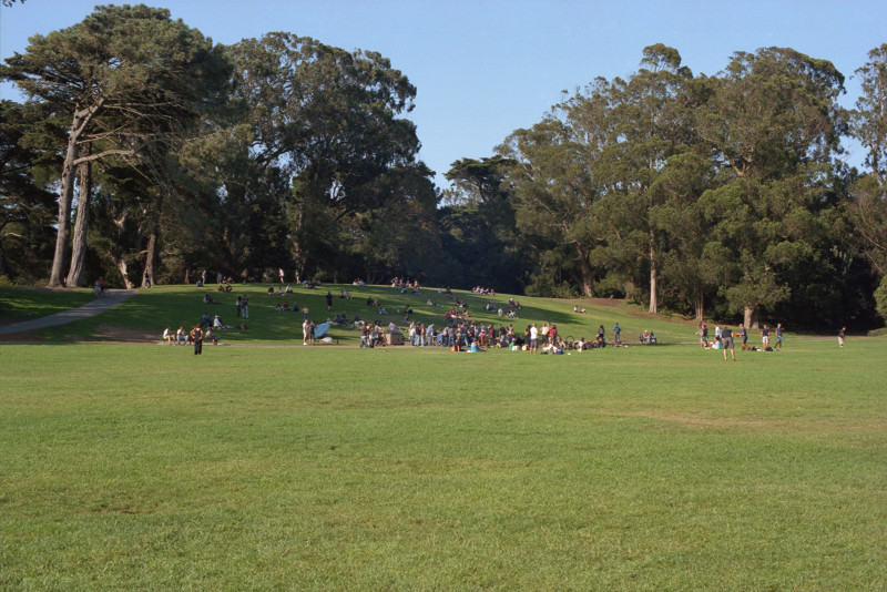 Percussionists and listeners enjoy a concert in Golden Gate Park. Most stand in the sunshine at the edge of a large meadow; some prefer the little hill rising from the meadow into the shade of a grove of tall and expansive eucalyptus.