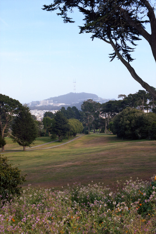 Looking through the forest and meadows of San Francisco's Lincoln Park Golf Course toward Sutro Tower, the greens and lanes of the golf course meanwhile.