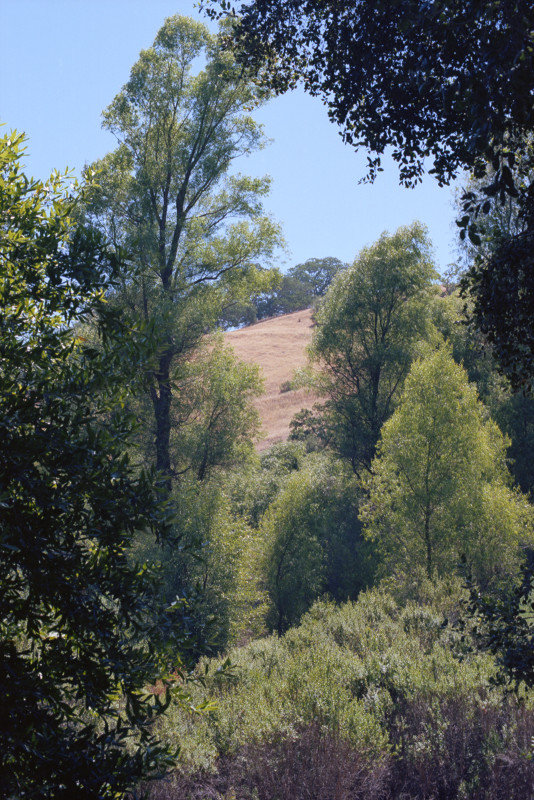 Sierra Azul is a protected region of the Santa Cruz Mountains. From the road to Mount Umunhum, we look into a forested ravine and a summer-beige grassy hillside in the distance. Umunhum is Ohlone for
