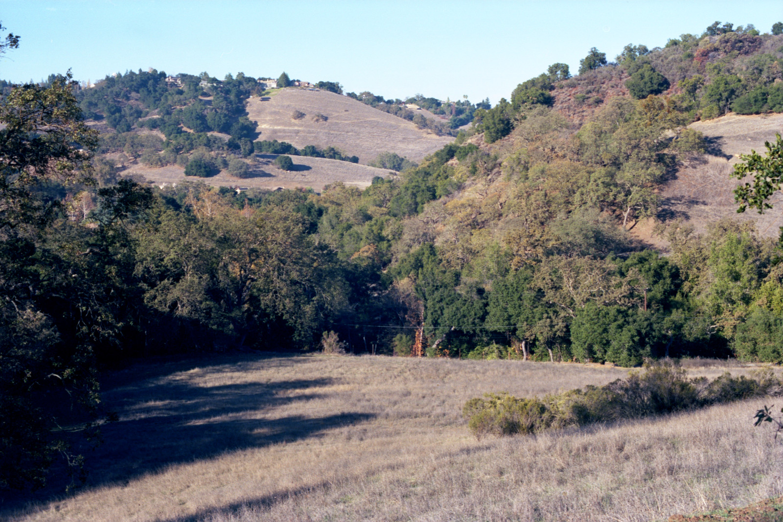 Meadow and hillside at Sierra Azul, Santa Cruz Mountains, near Los Gatos.